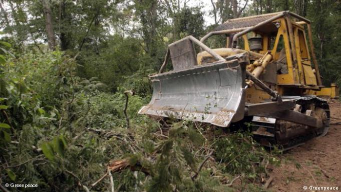 En México, la tala ilegal es muy difícil de regular, dijo Mariana Blanco Puente, de la FES en Ciudad de México.