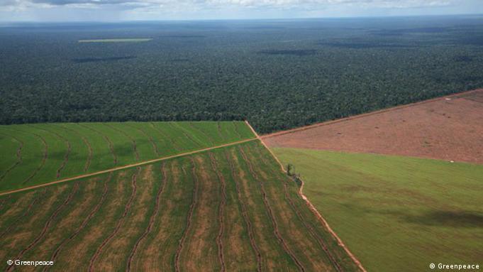 Sojaplantagen in Argentinien