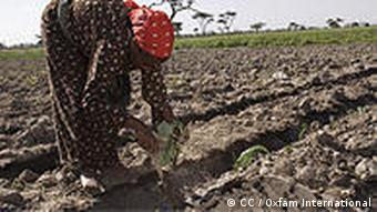 Safia works in her fields, Ethiopia