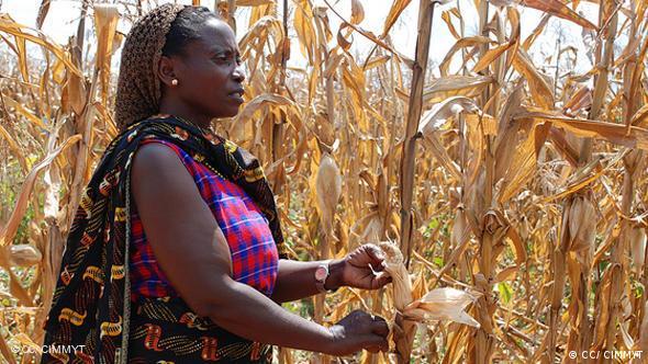 Farmer shows her dry maize field, Tanzania