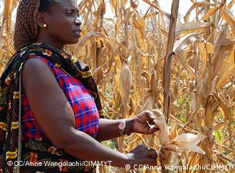 Woman standing in maize field (Source: Anne Wangalachi/CIMMYT)