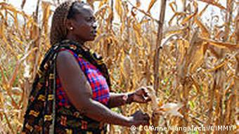 A farmer in Morogoro, Tanzania, shows the effects of drought on her maize crop