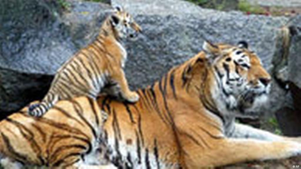 حدائق الحيوان..وسيلة حماية من الانقراض أم سجن؟ | علوم وتكنولوجيا | آخر  الاكتشافات والدراسات من DW عربية | DW | 14.09.2012
