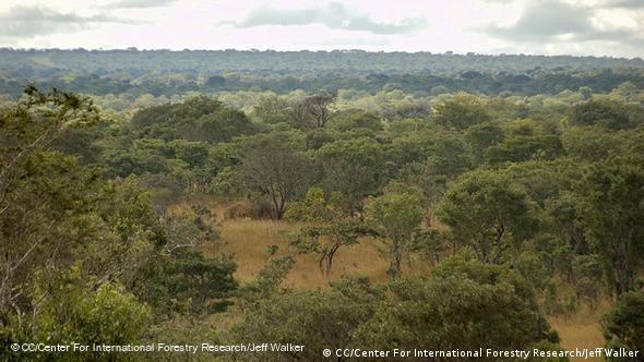 Miombo Trockenwälder, Sambia