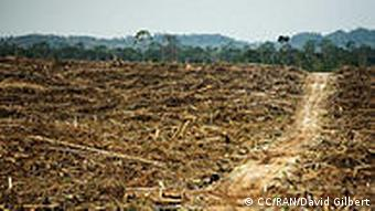 This photo is from an investigative report from Rainforest Action Network that presents evidence that Cargill is operating two undisclosed palm oil plantations in West Kalimantan, Indonesia. The destruction of primary rainforest by Duta Palma. West Kalimantan, Borneo. Cargill was a key purchaser of palm oil from this notorious rainforest destroyer up until 2008. Photo: David Gilbert/RAN (Rainforest Action Network) am 22.3.2011 aufgenommen im Mai 2011 geladen Lizenz: http://creativecommons.org/licenses/by-nc/2.0/deed.de ++++CC/RAN/ David Gilbert+++