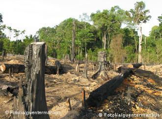 Desmatamento no estado caiu mais de 50% nos últimos 25 anos