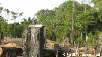 Abholzung des brasilianischen Regenwaldes Brasilien