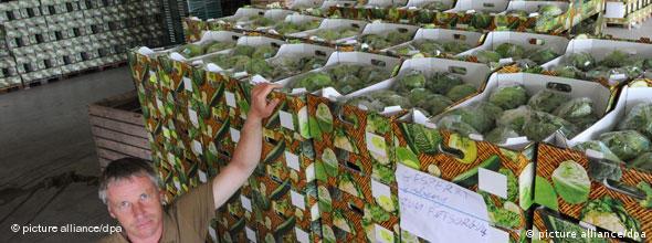 Gemüsebauer Hermann Voges steht sorgenvoll vor Kisten mit Salatköpfen, die entsorgt werden müssen. (Foto: picture alliance/dpa) (Foto: