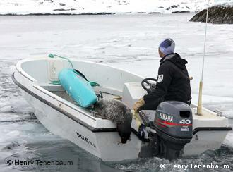 Peter Kristiensen taking his seal home in a motor boaat