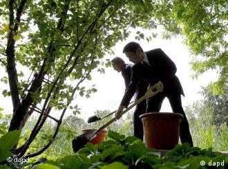 German President Christian Wulff, left, and Japanese Crown Prince Naruhito, right, symbolicly plant a cherry tree in the garden of the Bellevue Palace in Berlin, Germany, Wednesday, June 22, 2011. Naruhito stays in Germany for a four-day visit to attend events marking the 150th anniversary of the Japan-Germany amity treaty. (Foto:Michael Sohn/AP/dapd)
