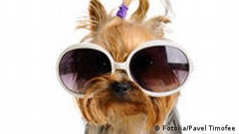 Ein Hund mit einer großen Brille