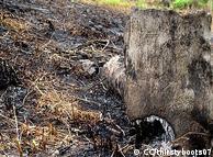 إزالة الغطاء النباتي عن طريق الحرق تسبب في تدمير آلاف الهكتارات