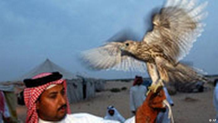 A man holds a falcon on his arm (c): AP Photo/Adam Butler