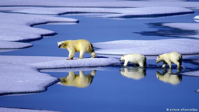 Eisbär Eisbären Klimawandel Eisscholle Symbolbild (picture alliance/dpa)