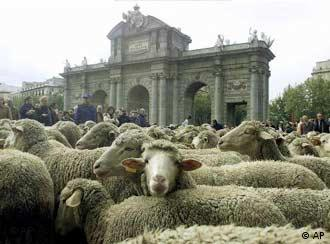 Are EP candidates wearing sheeps' clothing?