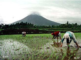 Rice farmers work under the Mayon Volcano which has been relatively quiet after violent eruptions several days ago Wednesday, June 27, 2001 in Bonga, about 330 kilometers (200 miles) southeast of Manila. Local Volcanologists said Wednesday that although the risk of another major eruption over the next few days has lessened, there is still danger of mud slides from the volcano as the Philippines enters the rainy season.(AP Photo/Nelson Salting)