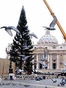 Weihnachtsbaum Vatikan