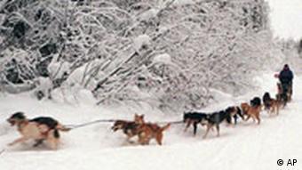 Los turistas vienen para ver los perros de trineo, y últimamente para ver las consecuencias del cambio climático