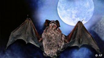 A bat flying towards a full moon in a dark sky