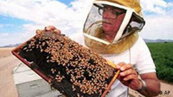 Bees and a beekeeper in the US