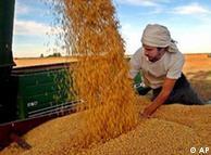 Leandro Curia, un trabajador agrícola, distribuye semillas de soja en un camión en una granja en Salto, algunos 190 kilómetros (120 millas) al noreste de Buenos Aires, Argentina