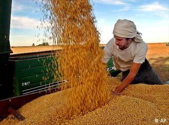 Leandro Curia, a farm worker, distributes soybeans on a truck at a farm in Salto, some 190 kilometers, (120 miles) northeast of Buenos Aires, Argentina, Monday April 14, 2003. Farmers are among those benefiting the most from the peso devaluation last year as it had a direct impact on exporters in Argentina, such as grain companies that export grains. Farmers have been contributing substantially to the national treasury's chest through export taxes. Argentina, the world's third largest soybean producer, expects a record crop for 2003. (AP Photo/Gustavo Ercole)