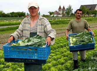Osteuropaeische Saisonarbeiter