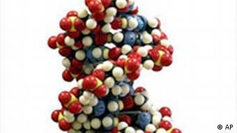 A DNA molecule model
